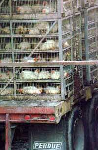 chick trucking